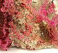 Calcite-rare08-2-38c.jpg
