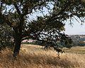 California Hills (6814679248) (2).jpg