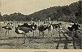 California south tehachapi.. (1900) (14779824975).jpg