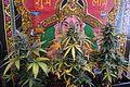 Cannabis DSC 0387 (26596708221).jpg