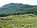 Cattle in Glen Lonan - geograph.org.uk - 194578.jpg