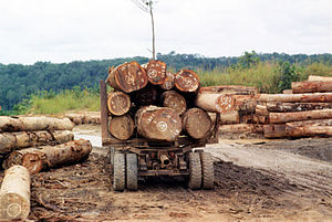 Illegal logging in Cameroon