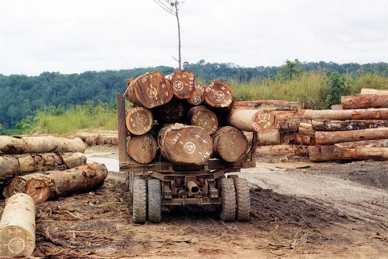 File:Central African Republic - Log transport.jpg