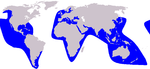 False killer whale range