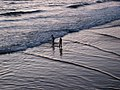 Chasing Waves (1471328461).jpg