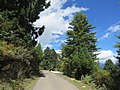Chelela to Paro road views during LGFC - Bhutan 2019 (117).jpg