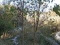 Cherkas'kyi district, Cherkas'ka oblast, Ukraine - panoramio - юра запеченко (178).jpg