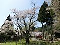 Cherry blossom at Fujiro, Gujo, 2016.jpg