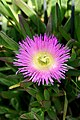 Chile-02701 - Little Beauty (49032493713).jpg