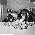 Chimpansees Hilda en Tilly uit Artis, Bestanddeelnr 917-2809.jpg