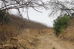 Chino Hills State Park - Image: Chino hills sp telegraph cyn road