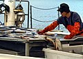 Chum Salmon sorting Taku Smokeries wc41.jpg
