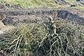Citadelle travaux entre contregarde et esplanade 2016-11-03 a.jpg