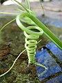 Climber natural spiral.jpg