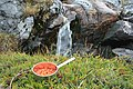 Cloudberry and pure Arctic water. - panoramio.jpg