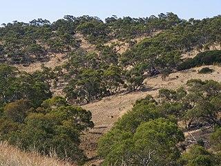Cobbler Creek Recreation Park Protected area in South Australia