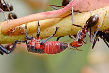 pseudoscorpion and beetle symbiotic relationship definition