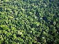 Comunidade clímax em floresta.jpg