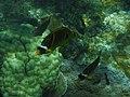 Coral reef 101.jpg