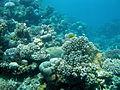 Coral reef 876.jpg