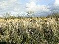 Corsydd Llangloffan National Nature Reserve - geograph.org.uk - 1728052.jpg