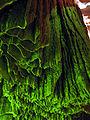 Cortinas gruta da lapinha2.jpg