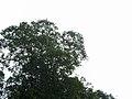 CostaRica (6108805584).jpg
