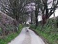 Country lane near to Dwyran - geograph.org.uk - 149902.jpg