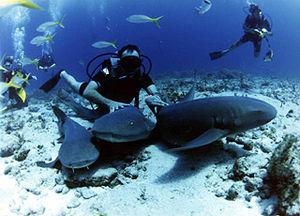 Español: Cueva de los tiburones dormidos