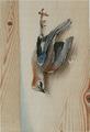 Død skovskade Johan Bülow 1772.png