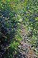 DGJ 4236 - Road-Path-Woods to Cape Sharp Lighthouse (6202964205).jpg