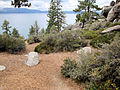 DSC02804, South Lake Tahoe, Nevada, USA (6725088961).jpg