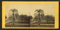 Date palm tree, St.Augustine, Fla, from Robert N. Dennis collection of stereoscopic views.png