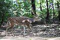 Deer iitm 1.jpg