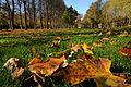Der Bad Mergentheimer Kurpark im Herbst. 07.jpg