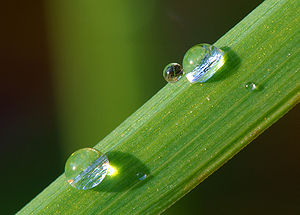 Śūnyatā - The emptiness of phenomena is often compared to drops of dew