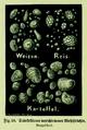 Die Frau als Hausärztin (1911) 038 Stärkekörner verschiedener Mehlfrüchte.png