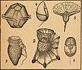 Die Pflanze als Erfinder (1920) (20912719736).jpg