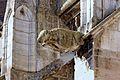 Dijon Cathédrale Saint-Bénigne 24.jpg