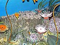 Diorama of a Devonian seafloor - syringoporid coral, crinoids, solitary rugose corals, trilobite, algae (45603714032).jpg