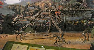Iguanodontia - Tenontosaurus skeletal mounts at the Sam Noble Oklahoma Museum of Natural History