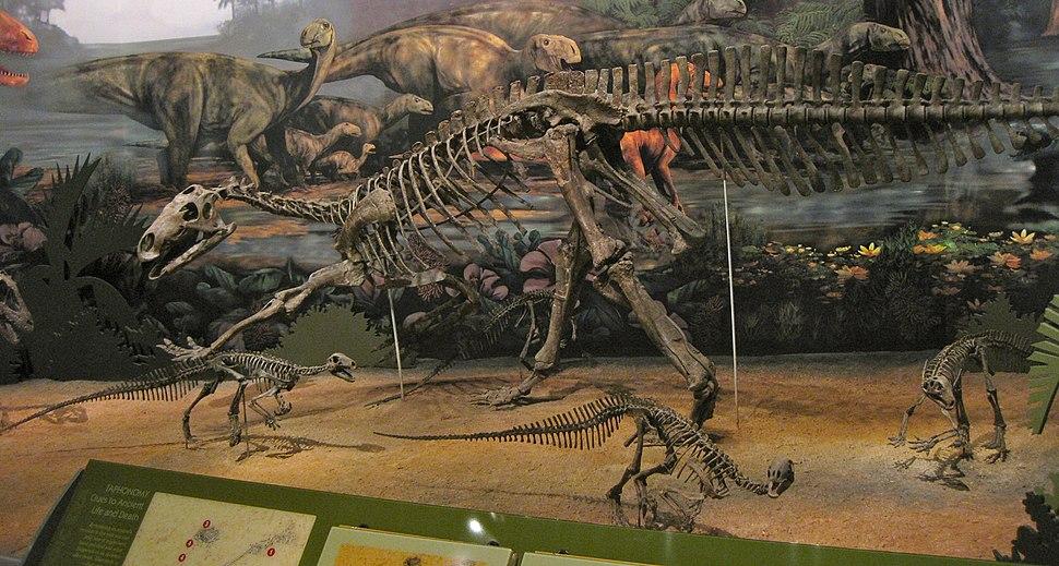 Display at the Sam Noble Oklahoma Museum of Natural History, Norman, Oklahoma (5977785055)