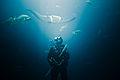 Dive 345.jpg