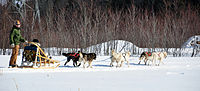 Dog sled quebec 2010.JPG