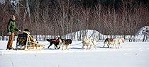 Dog sled quebec 2010.JPG