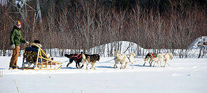 Dog sled - Image: Dog sled quebec 2010