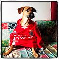 Dog with Benfica shirt.jpg