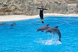 Dolphins Loro Parque BW 4.jpg