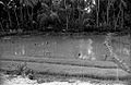 Duckpond - Sông Cầu 1971 (9680580102).jpg