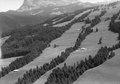 ETH-BIB-Wald bei Bulle-LBS H1-023046.tif